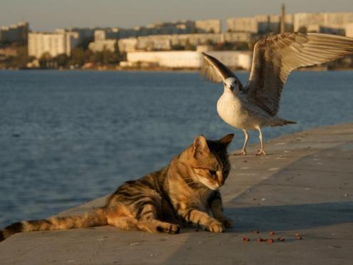 Gato y Gaviota