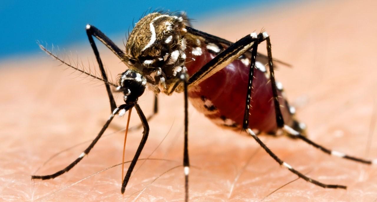 Cartagena en el 'Mapa Rojo' del Mosquito Tigre