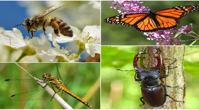 ¿Qué Diablos está Pasando con los Insectos?