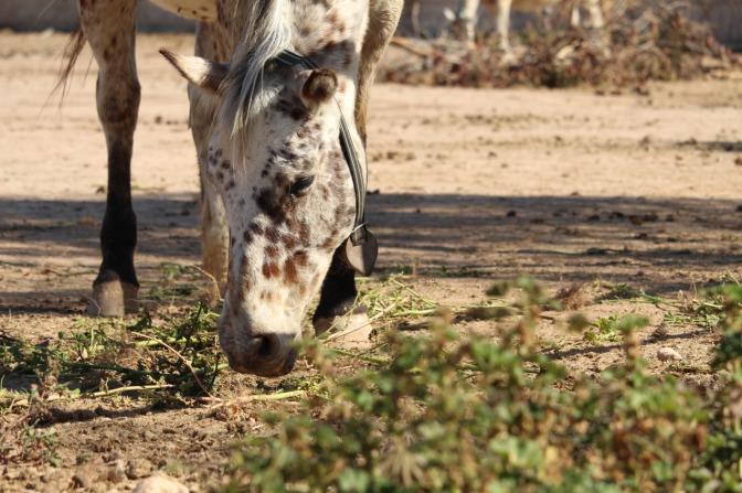 """C´s Cartagena: """"Fundación Tiovivo, Intervención Asistida con Animales"""""""