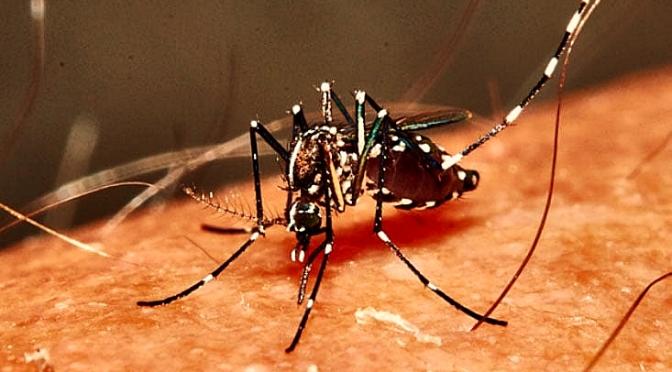 Alto Riesgo de Dengue y Zika por la Proliferación del Mosquito Tigre