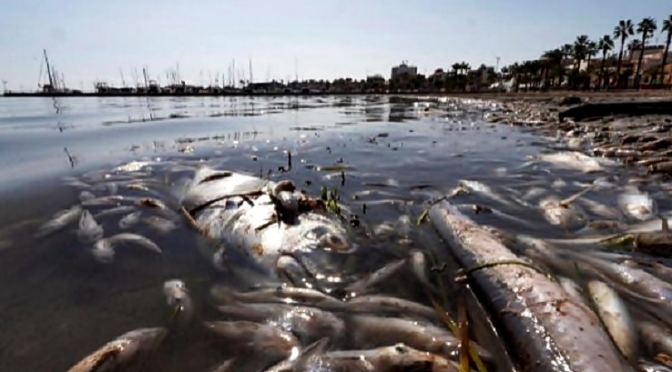 """Mar Menor: """"Crónica de una Muerte Anunciada"""""""