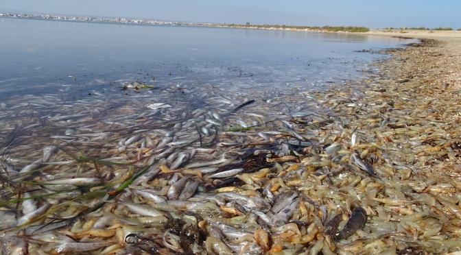 El Mar Menor dice basta – ANSE WWF