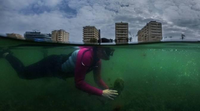Mar Menor, cuando el desprecio al medio ambiente se vuelve contra nosotros
