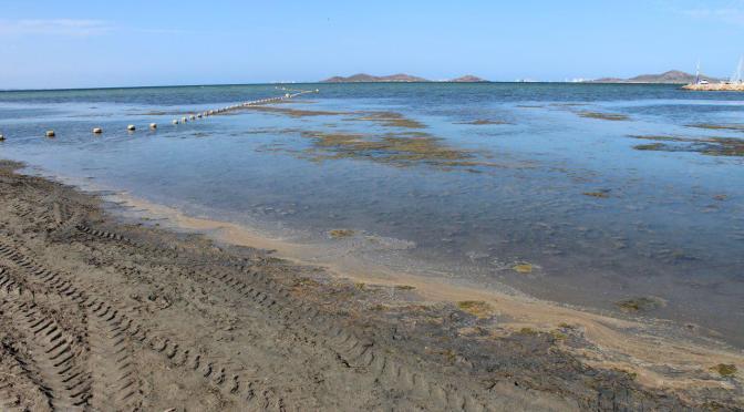 El Gobierno Local Intenta Lavar sus Culpas y las de la CARM con el Mar Menor