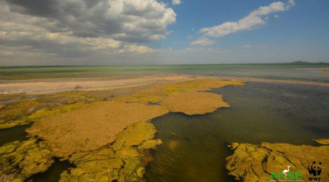 Las organizaciones consideran que el dictamen de la Comisión Europea indica que las medidas para la protección del Mar Menor son insuficientes
