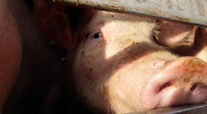 La guerra del bistec: el ministro que se sincera y el agropoder que se insurge