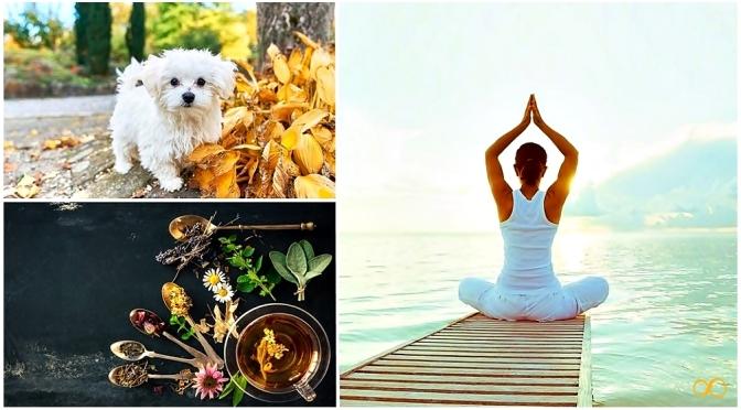 16 remedios naturales para aliviar el estrés y la ansiedad