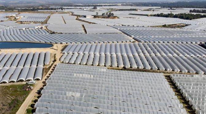 WWF calcula que en  el Mar Menor, Daimiel, Doñana y Arenales se riegan de forma ilegal 88.000 hectáreas